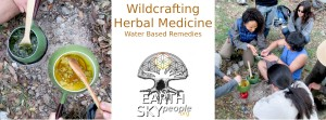 Wildcrafting Herbal Medicine