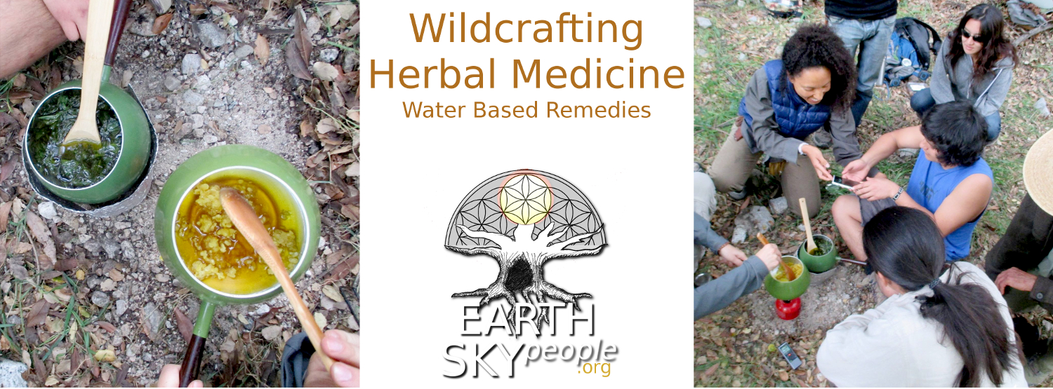 Wildcrafting Herbal Medicine