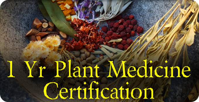 Plant Medicine Certification Program
